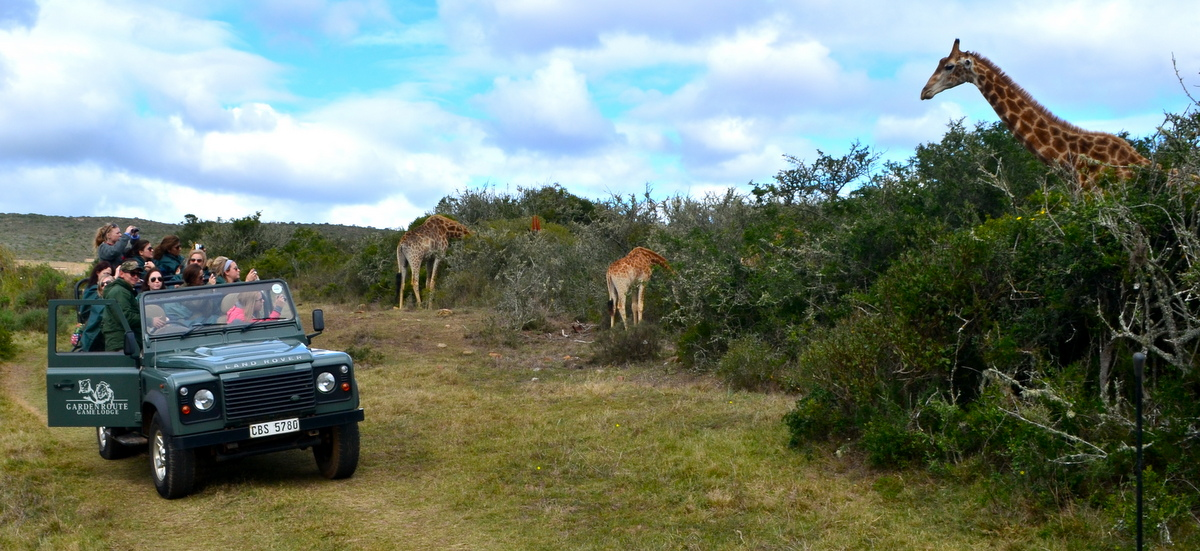 Giraffe spotting in Cape Town